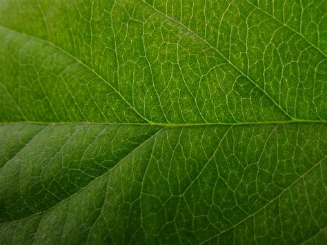 pattern bush in leaf green the bar and other data analysis tools for plant biology