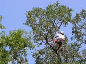 Tree Service In Tree Service Lake County Il Affordable Tree Service