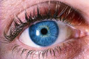 ocular blindness glaucoma eye disease the silent thief of sight