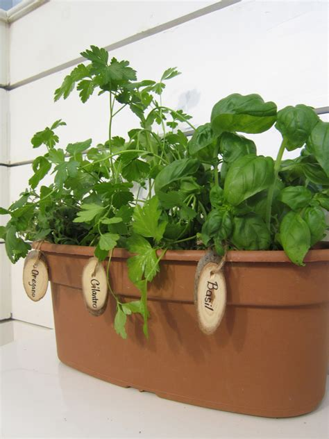 Indoor Windowsill Herb Garden herb garden markers a giveaway the honeycomb home