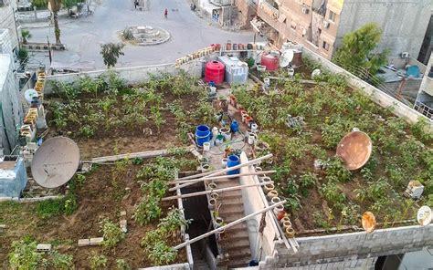 Syria Serut Daily 3 a garden grows amid a siege in syria al jazeera america