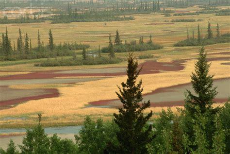 The Interior Plains Vegetation by Lakeview Grade 5 Interior Plains