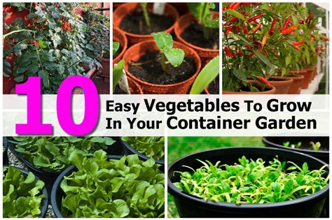 Easy Vegetable Garden Raised Bed Vegetable Garden Layout Easy Garden Vegetables