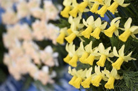 fiere fiori chelsea flower show la fiera reale dei fiori a londra foto