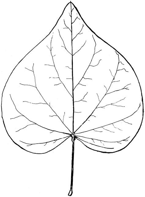 Simple Leaf Outline by The Gallery For Gt Simple Leaf Outline Printable