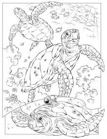 Realistic Animal Coloring Pages For Adults Free Nature  sketch template