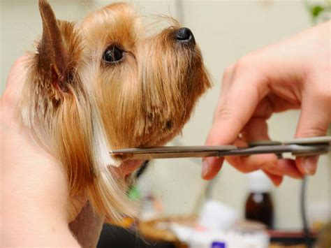saving dogs save money on grooming