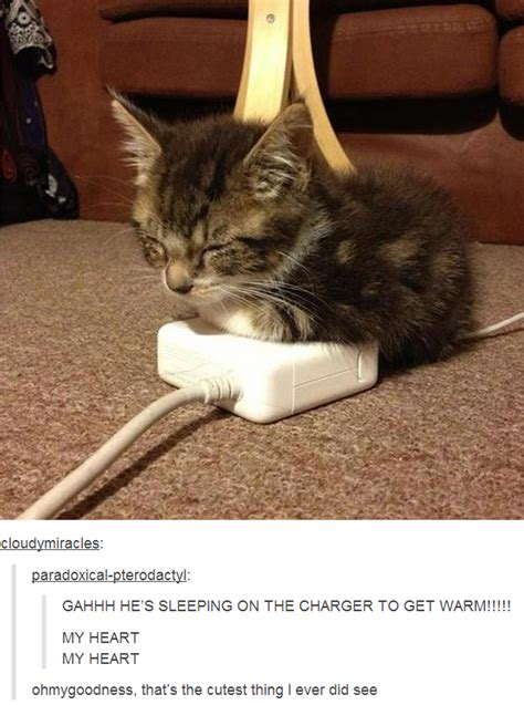 Cat Sitting Meme - a cat on a charger cats know your meme