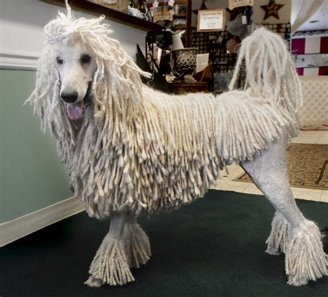 popular poodle names akc names top breeds local experts advise lifestyle