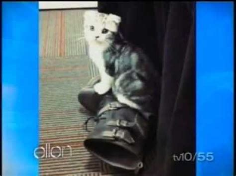 ellen pompeo taylor swift cat ellen pompeo talking about taylor swift s cat youtube