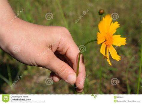 fiore per la mamma fiore per la mamma fotografia stock libera da diritti