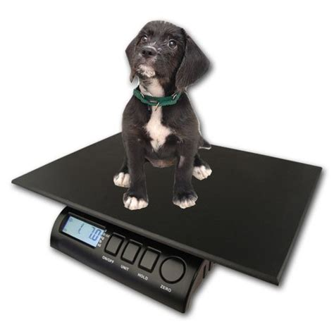 yorkie weight scale yorkie growth chart and terrier development stages yorkie