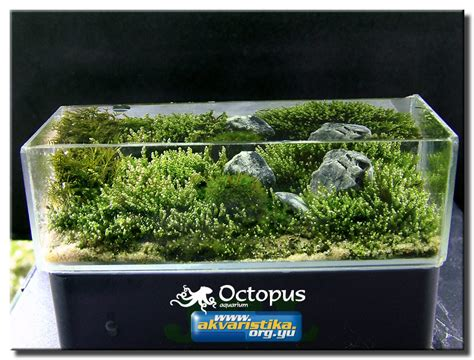 small tank aquascaping aquascape of the month june 2008 quot picture of my childhood