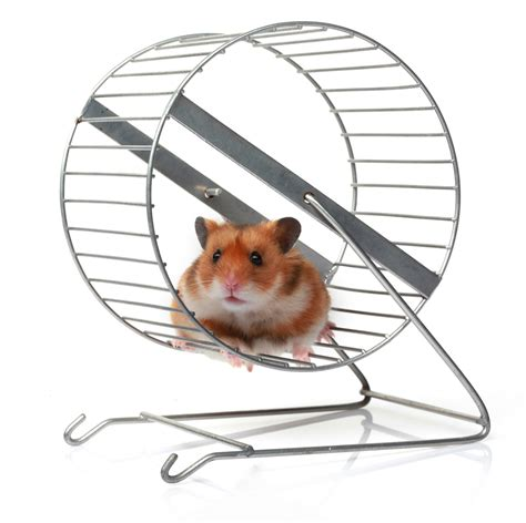 Wheel Hamster Kincir Hamster Mainan Hamster a new season of insights the hamster wheel