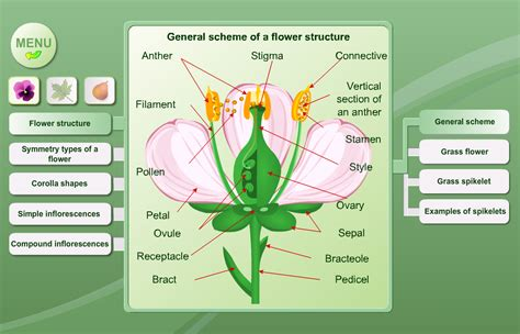 biology plant morphology android apps on google play