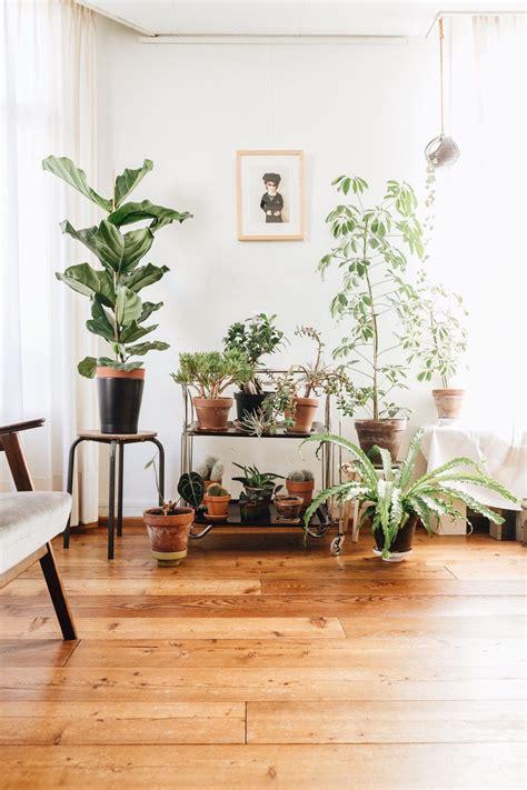 plantgang fiddle leaf fig cacti succulents schefflera