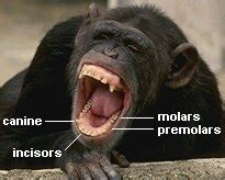 primates monkeys