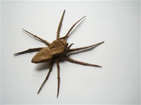Origami Insects - insect origami amazing news