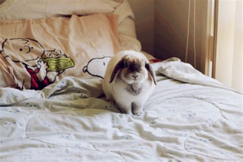 bunny bed bunny on the bed teh cute