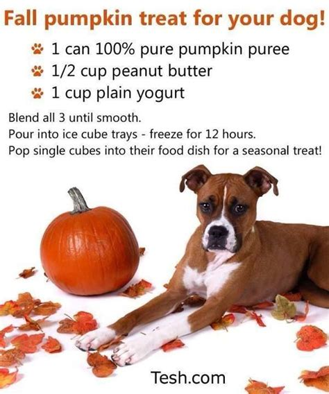 pumpkin treats for dogs fall pumpkin treat for your must do s