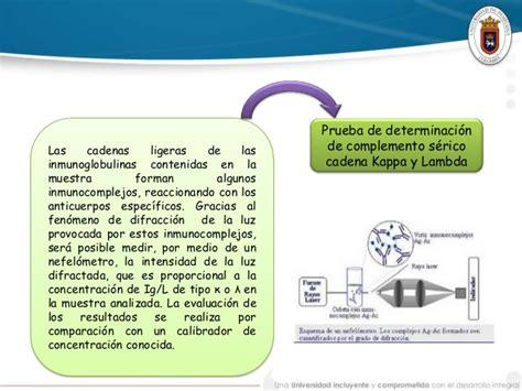 cadenas ligeras kappa y lambda valores normales caso cl 237 nico inmunolog 237 a gn autoinmune1