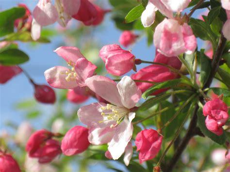 Fiori Hijau Muda gambar alam cabang mekar menanam daun bunga