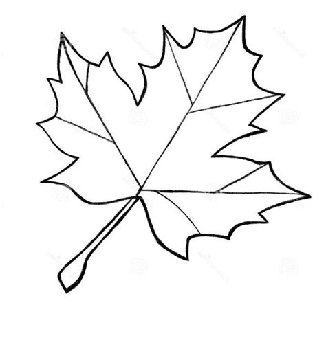 coloring page of a maple leaf free coloring pages of maple leaves
