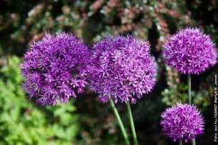 garten pflanze pflegeleichte gartenpflanzen winterhart beste garten ideen