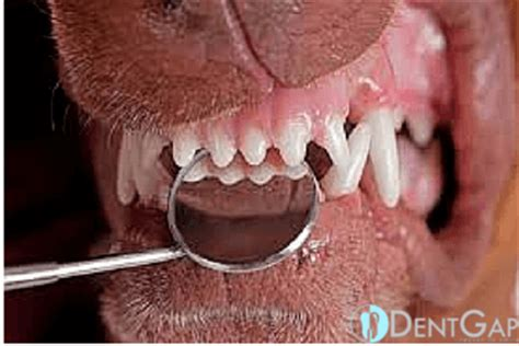 how much to clean dogs teeth teeth cleaning how to take care of your s teeth