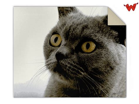 Decke Katze by Individuelle Fotodecken Gestalten Wildemasche