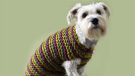 knitting pattern dog coat jack russell top 5 free dog sweater knitting patterns loveknitting blog