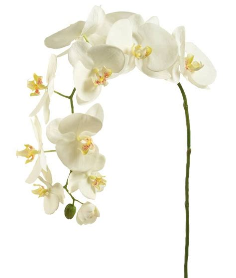 Types Of Flower Arrangements by Eleletsitz Types Of White Orchids Images