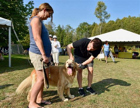 canadian golden retriever adoption service inc viamede resort in kawartha featured in the rick mercer report news community