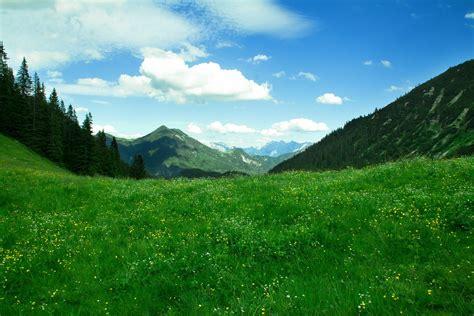 fondo pantalla prado naturaleza fondo de pantalla de monta 241 as prado pradera flores