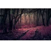 Nature Landscape Forest Path Mist Trees Shrubs