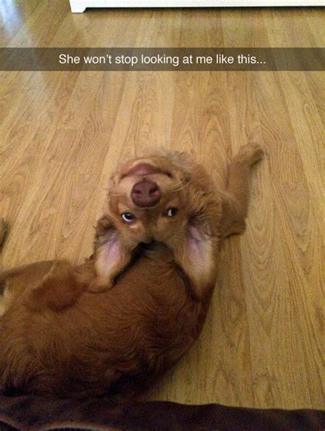dog   weirdo pictures   images