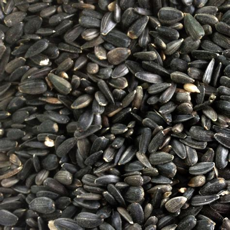 25kg black sunflower seeds high oil content for wild bird