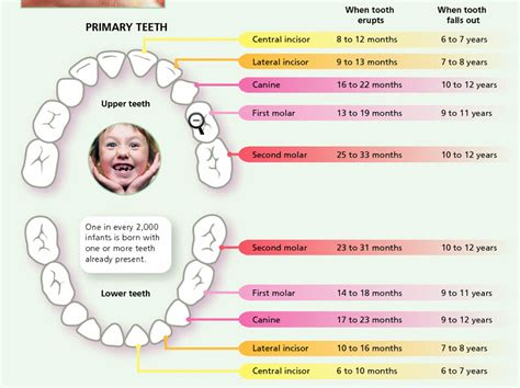 ages when baby teeth come in and fall out baby teeth falling out gif images