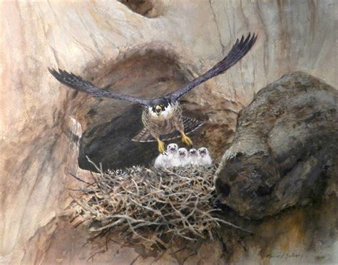 40 best images about falcons nest on pinterest atlanta falcons football wall and blog peregrine falcon chicks in cliff nest 11x14 watercolor
