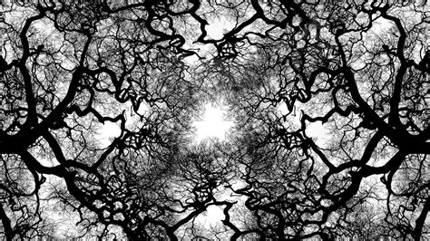 whit tree tree black and white background wallpapers 4247 amazing