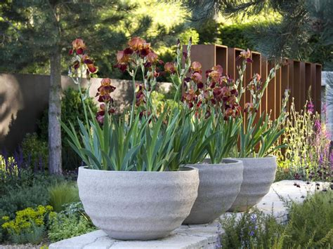 large outdoor 10 ideas for using large garden containers hgtv