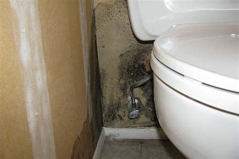 basement cleaning mold walls the toilet cleaning