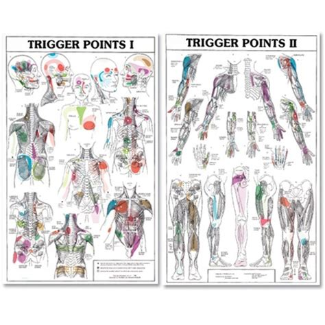 diagram poster trigger point charts i and ii trigl trigger points poster