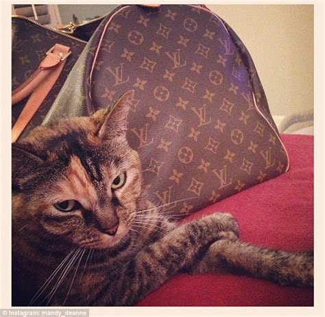 Rich Cat Meme - rich cats of instagram meet the moggies who are living in