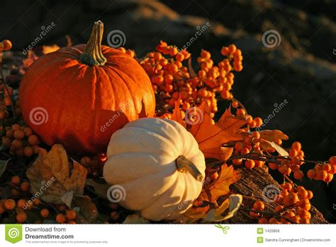 harvest colors harvest colors stock photo image of seasonal gold color
