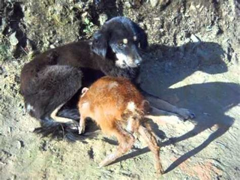 what to feed baby puppies brest feeding a fawn baby deer 2 funnydog tv