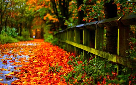 download colorful autumn 3d live wallpaper free for autumn wallpapers hd wallpaper cave