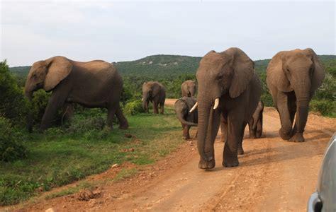 voyage en afrique du sud en famille conseils d une