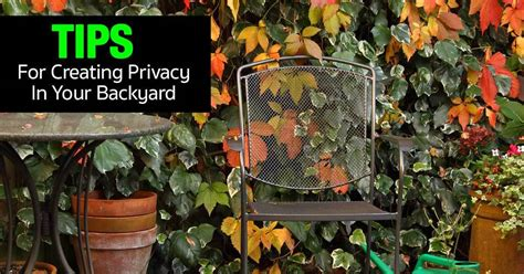 how to create privacy in your backyard privacy screen ideas tips for creating privacy in your