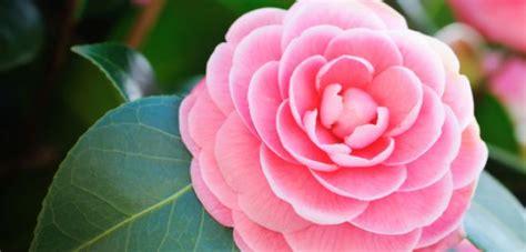 foto dei fiori più belli fiori belli gpsreviewspot